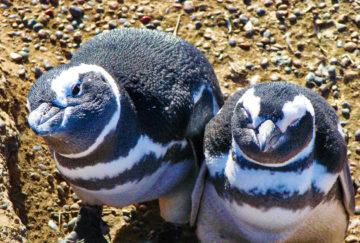 Patagonia viajes para novios