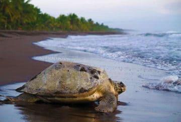 Costa Rica viaje para recien casados