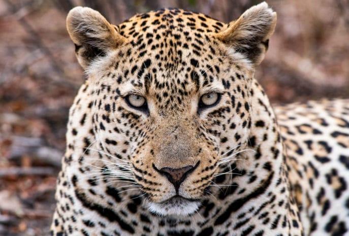viajes de novios con safari