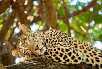 Viaje de novios a Tanzania - Parque Nacional Serengeti