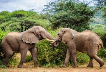 Viaje de novios a Tanzania - Parque Nacional Tarangire