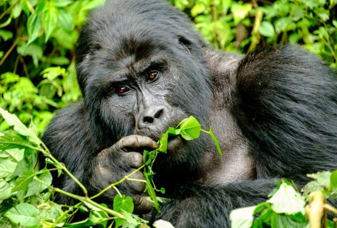 Viaje de novios a Uganda