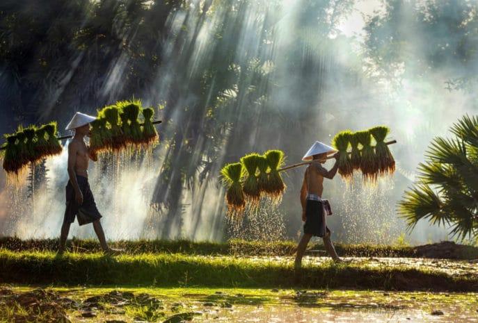 viaje de novios a vietnam sudeste asiatico